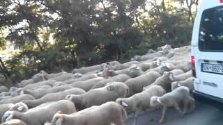 krushe e madhe delet rruges per ne bjeshk te sharr