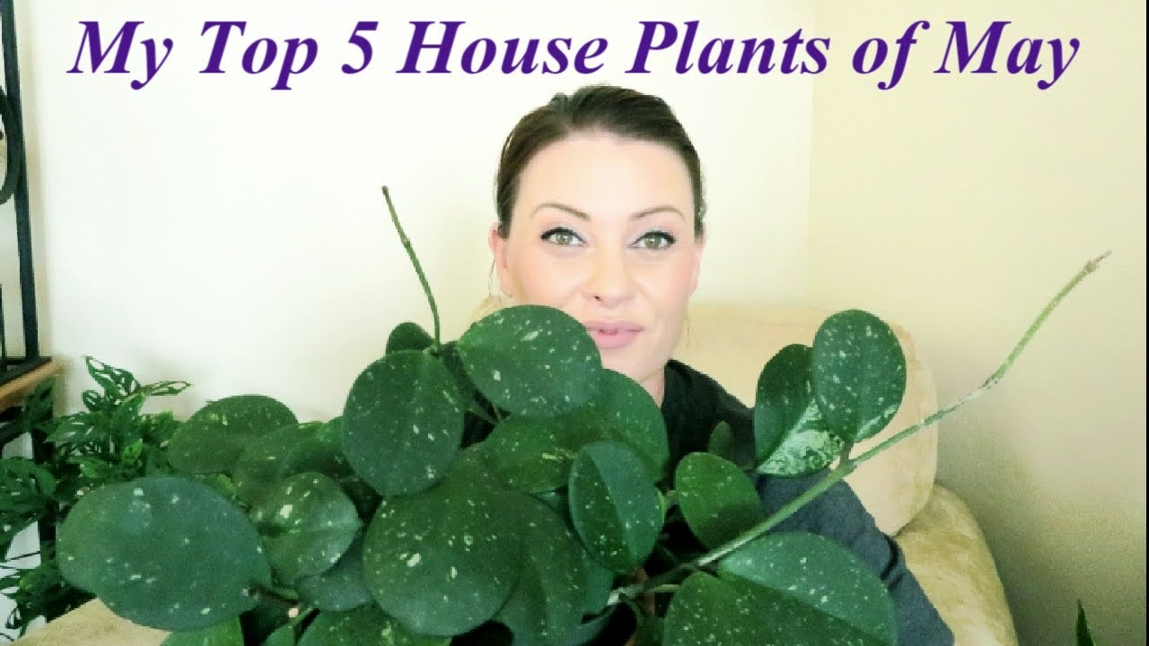 My Top 5 House Plants Of May 2019 Youtube