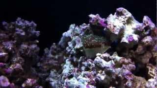75g reef tank huge update new lighting new additions