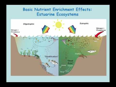 Impact of Phosphorus on Estuarine Water Quality