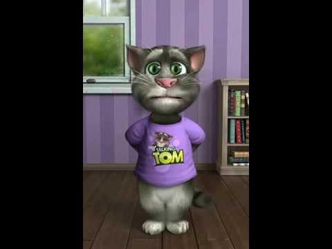 Кот интересный и смешной