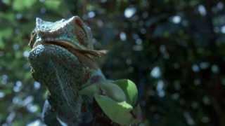 Класс! природа+музыка. SpectraSoul - Lost Disciple VIDEO. HD 720p.(СМОТРЕТЬ НА МАКСИМАЛЬНОМ КАЧЕСТВЕ - 720p_ HD ------------------------------------------------------------------------------ Внимание! Данное..., 2012-03-27T15:45:14.000Z)