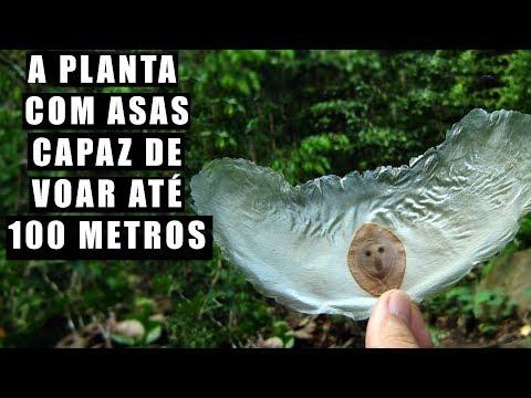5 coisas que as PLANTAS fazem quando não olhamos