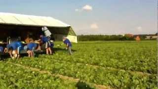 Українці на роботі в Польщі