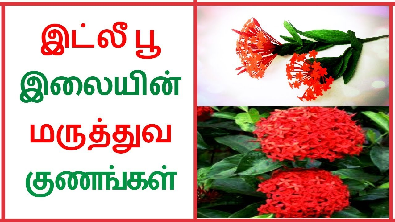 Health benefits of ixora flower leaf in Tamil | Tamil Dear by Tamil Dear