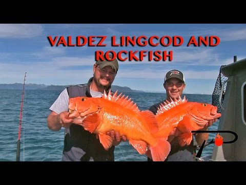Valdez Alaska Lincod And Rockfish Fishing