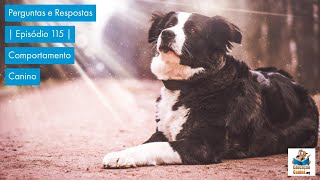 Perguntas e Respostas | Episódio 115 | Comportamento Canino