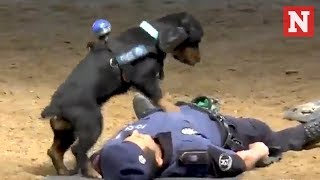 Madrid Police Dog Performs CPR On Officer
