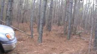 dogs running deer part 2