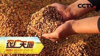《农广天地》 20190514 种豆子也能赚大钱| CCTV农业