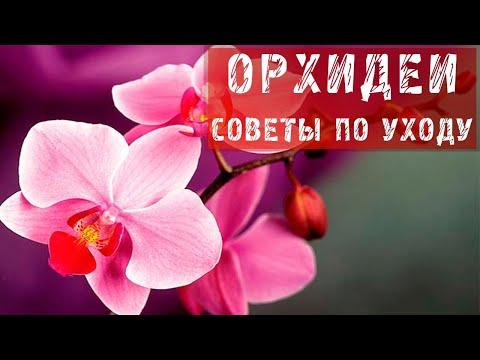 Орхидея — уход в домашних условиях, полезные советы (видео)