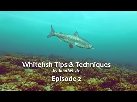 Whitefish Tips & Techniques Episode 2