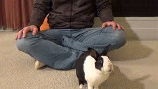 Rabbit learning magic trick