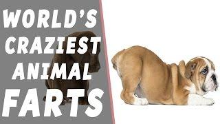 World's Craziest Animal Farts