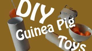 Diy Guinea Pig Toys