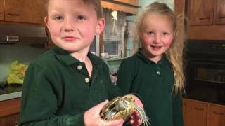 Turtle Surprise - Red Eared Sider - Kids with Turtles