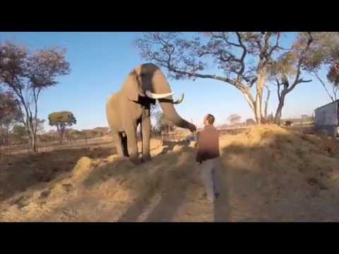 Real Gap Experience Zimbabwe Rhino and Elephant Conservation