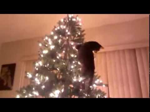Kot Wchodzi Na Choinke Cat Climbs On Christmas Tree Youtube