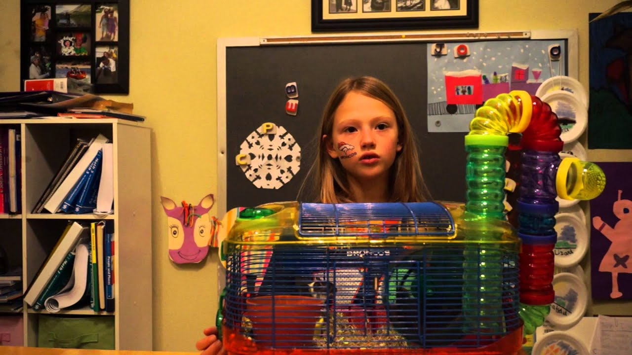 Gerbils For Kids How To Care For Gerbils 14 Steps With