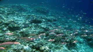 видео Моллюски Черного моря