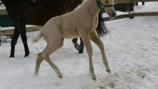 Konie...Tym się żyje...