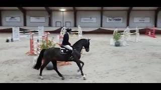 casago II hengstencompetitie 2019 kronenberg