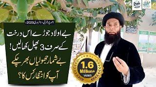 Bohar Ky Darakht Ky Fawaid or BeAuladi Ka Ilaj || Sheikh ul Wazaif || Ahmed Pur East