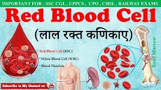 Red Blood Cells(लाल रक्त कणिकाए) | RBC | Fuction of red blood cells in hindi | ssc campus mp4