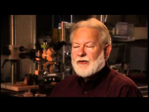 David Nichols: the chemistry of DMT is a little different from the chemistry of Mescaline analogs