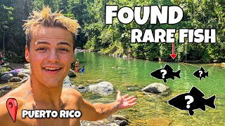 FINDING RARE COLORFUL FISH in RAIN FOREST!!