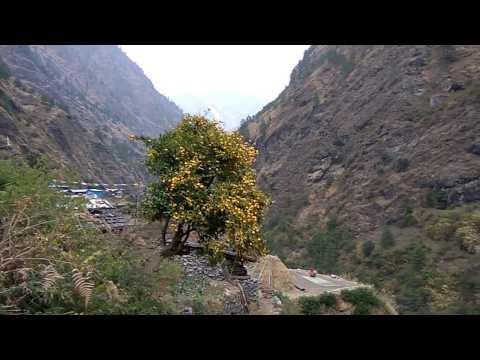 Мандариновое дерево, вокруг Манаслу