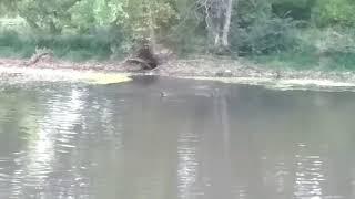 Рыбалка с собаками