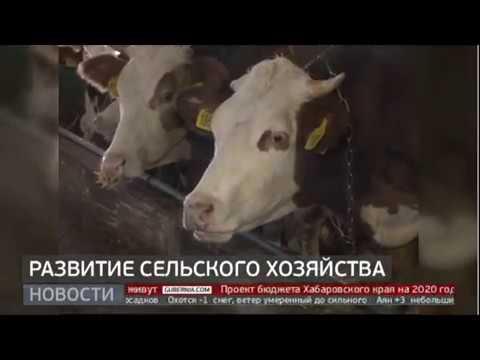 Развитие сельского хозяйства. Новости. 24/10/2019. GuberniaTV