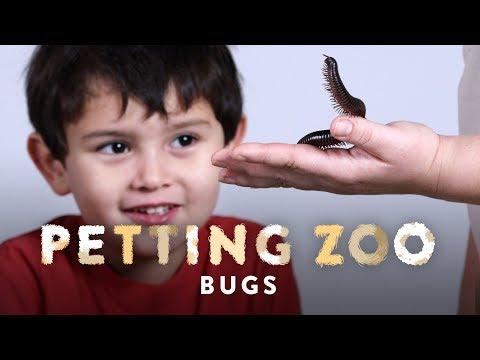 Bugs | HiHo Petting Zoo | HiHo Kids