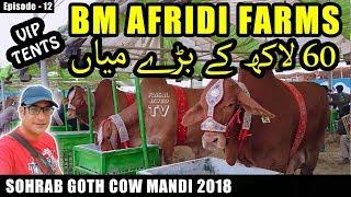 COW MANDI SOHRAB GOTH 2018 KARACHI | VIP TENTS | Episode – 12 | BM AFRIDI FARM | Video in URDU/HINDI