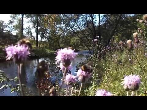 Река Аша поселка Точильный