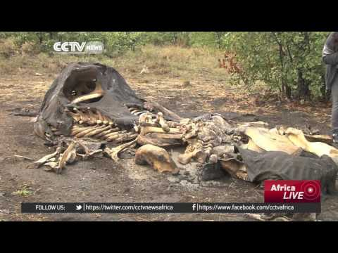South Africa parks working to protect animals from poisoning by poachers