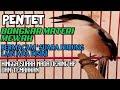 Burung Cendet Gacor Isian Mewah Masteran Pentet  Mp3 - Mp4 Download