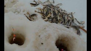 Зимняя рыбалка на Белом море. Ловим навагу.Часть 1.