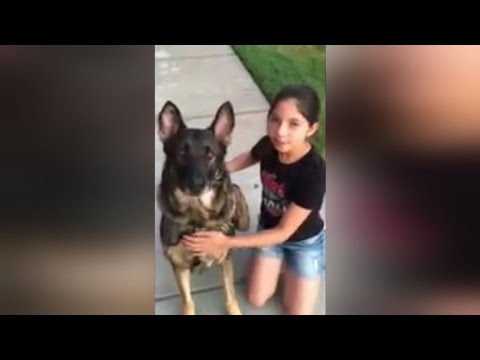 Watch This German Shepherd Help Pull Out a Little Girl's Tooth