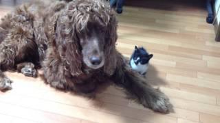 2013年10月30日 本須賀海岸で拾った子猫、3日後里親が見つかってもらわ...