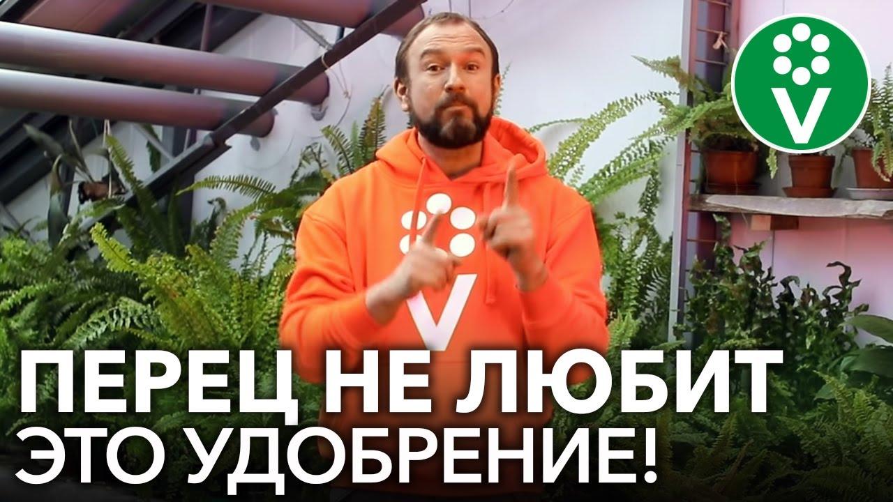 ХУДШЕЕ УДОБРЕНИЕ ДЛЯ ПЕРЦА! Не подкармливайте рассаду перца этим популярным фосфорным удобрением