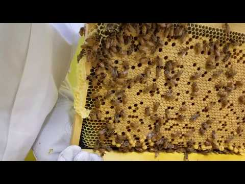 First inspection AZ Hive