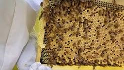 First inspection AZ Hive