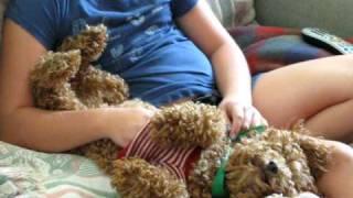 Dog Belly Rub