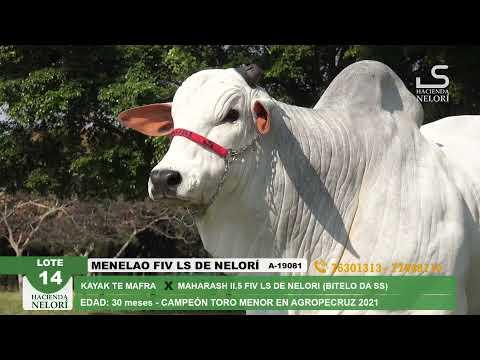 Lote 14 Menelao FIV LS