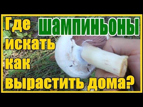 Перечный гриб: ядовитый или нет - АгрономWiki
