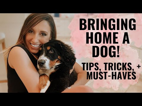 Bringing home a puppy! Tips, tricks, & musthaves for getting a dog
