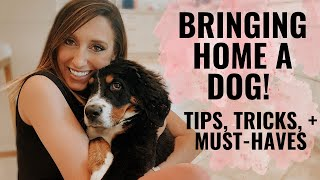 Bringing home a puppy! Tips, tricks, & must-haves for getting a dog