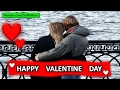 Valentine Day Video, Wishes, Song, Wallpaper, Whatsapp Video Download, Greeting